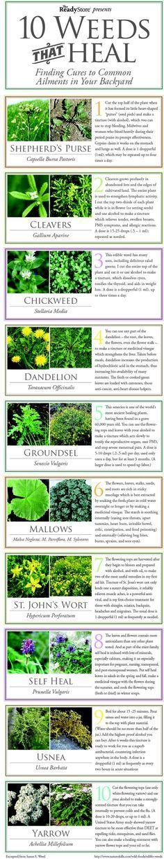 10 Weeds That Heal