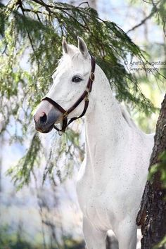 Grey Horses, Donkeys, Thoroughbred, Portrait, Beautiful Horses, Wallpapers, Black And White, Pretty, Animals