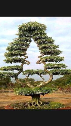 Beautiful Bugs, Amazing Nature, Beautiful Gardens, Beautiful Flowers, Trees And Shrubs, Flowering Trees, Trees To Plant, Garden Trees, Garden Art