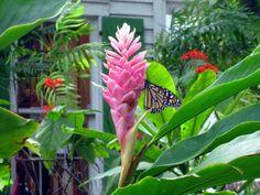 Florida Keys Tropical Garden | Audubon House and Tropical Gardens in Key West, FL