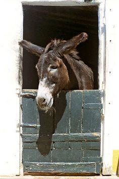 Donkey (by flower girl…)