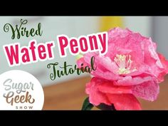 How to make wafer paper peonies for cake decorating - YouTube