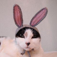 crochet pattern rabbit pet hat halloween costume by xmoonbloom