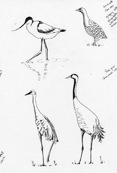 Day 9 - some bird sketches