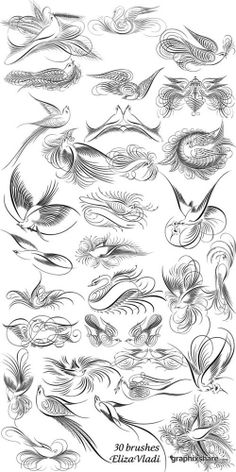 Brushes - Calligraphy Bird for Tattoo