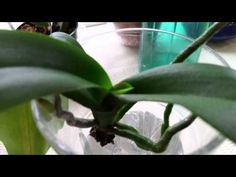 success with semi water method 5- 16- 2015 - YouTube