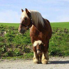 Big horse, Little horse