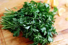10 Easiest Veggies to Grow in Your Garden
