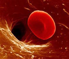 Hematie al microscopio