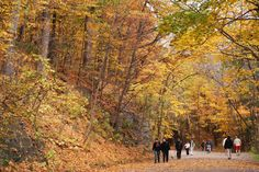 Fall is a beautiful time in the city, especially on the Mont-Royal. Where is your favorite place to enjoy the outdoors in Montreal?