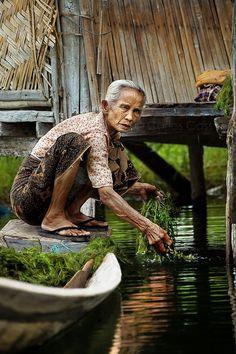 An old woman collecting algae.  Inle Lake in Burma.  Una anciana sobre una barca recolectando algas en el lago Inle en Birmania.