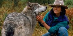 Jamie Dutcher being greeted by the omega wolf of the pack (© Jim & Jamie Dutcher/Nat Geo Stock/Caters News Agency)