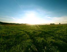 #Sunny #Fresh #GreenMeadow #Slonce #Laka #Zielen