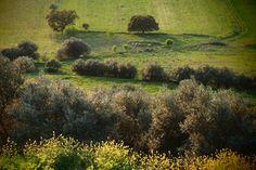 Photo Vineyard, Portugal, Painting, Outdoor, Art, Travel, Outdoors, Art Background, Vine Yard