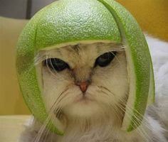 15 Cats Wearing Fruit Helmets