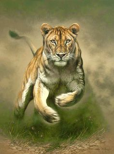 There's nothing more evocative than the sight of a lioness at full charge. The raw essence of power and focus! By Fuz-Caforio-Art