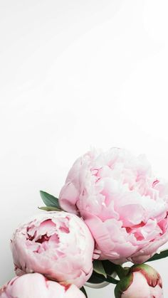 59 Ideas For Flowers Peonies Wallpaper Inspiration Pink Wallpaper Light, Pink Wallpaper Quotes, Pink Wallpaper Girly, Pink Glitter Wallpaper, Pink Wallpaper Backgrounds, Pink Wallpaper Iphone, Flower Backgrounds, Iphone Wallpapers, Floral Wallpapers