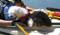 Ivy and Nash love to paddle together Paddle, Kayaking, Ivy, Dogs, Animals, Animaux, Doggies, Animal, Animales