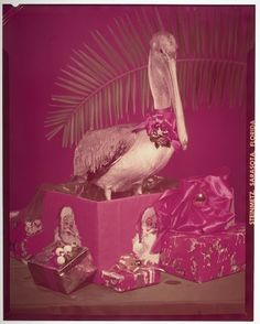 Joseph Janney Steinmetz, Untitled (pelican standing in a giftbox and wearing a Christmas bow), c. 195o, Harvard Art Museums/Fogg Museum.