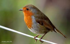 Bird on a Wire 2 | Flickr - Photo Sharing!