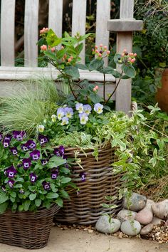 lovely outdoor space, flowers in pots