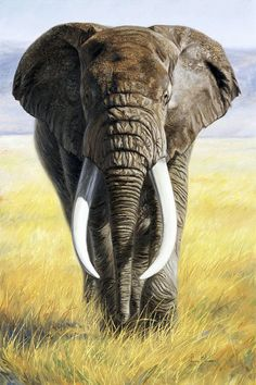 Canvas Art by Lucie Bilodeau is part of Elephant painting Power Of Nature Canvas Print by Lucie Bilodeau All canvas prints are professionally printed, assembled, and shipped within 3 4 business - Wildlife Paintings, Wildlife Art, Animal Paintings, Animal Drawings, Elephant Face, African Elephant, African Animals, Elephant Canvas, Giraffe