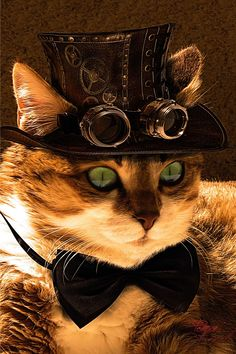 Happy Caturday :) Cat steampunk by coolzero2a    Facebook |  Google + | Twitter Steampunk Tendencies Official Group
