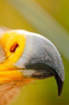'Zerlegewerkzeug' ein Foto von 'birdy`s'