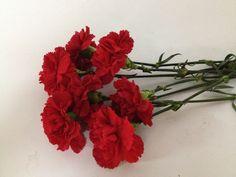 Cuantas cosas tan lindas se pueden decir a la gente que se ama con un simple y rojo clavel.