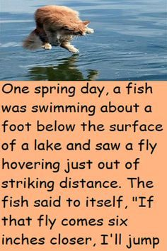 """One spring day, a fish was swimming about a foot below the surface of a lake and saw a fly hovering just out of striking distance. The fish said to itself, """"If that fly comes six inches closer, I'll jump up and have myself a meal."""" Just then, a bear on the shore of the lake looked up and said to itself, Good Jokes To Tell, Small Tractors, Jokes And Riddles, Below The Surface, Spring Day, Looking Up, Closer, Distance, Meal"""