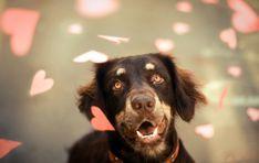 Amor de cão ♥ (Foto: Jessica Trinh)