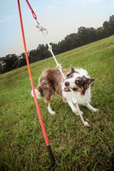 Tether Tug - Outdoor Interactive Tug Toy for Dogs - Made in USA