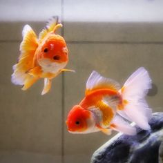 A Goldfish Keeping Journey Aesthetic Photo, Aesthetic Pictures, Doja Cat, Wall Collage, Art Reference, In This World, Cute Animals, Disco Fashion, 80s Fashion