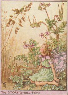 Storks Bill Flower Fairy by Cicely Mary Barker