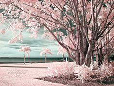 Cairns, Australia in Infrared Infrared Trees by La-Vita-a-Bella