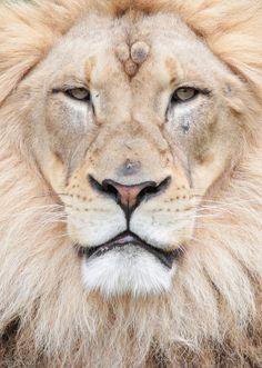 King!
