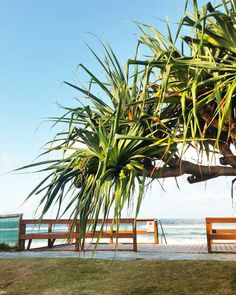 Iconic Pandanus Trees that Line the Coast along Palm Beach  Finally a sunny afternoon let's hope this carries on through the long weekend! Two in a row I could get use to this more often.   #pandanustree #pandanus #beachlife #palmbeach4221 #goldcoastbusiness #palmbeachgoldcoast #currumbinbeach #goldcoast #palmbeachqld #fnre #firstnationalrealestate #firstnational #sunnyafternoon #sunlight #afternoondelight #sunlit #sunset #tree #nature #sky #ig_naturesbest #skystalking #realestate #realtor…