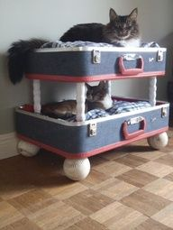 Phoebe needs this! A cat bed made from old luggage, genius!~ would also be a cute coffee table. lay a glass or wood on the top and wahla!