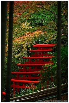 Shrine in bamboo forest, Kyoto by Damien Douxchamps, via Flickr