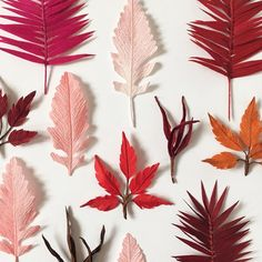 A selection of crepe paper leaves by A Petal Unfolds
