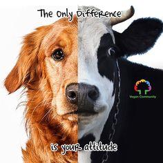 Go vegan.    #vegan #vegancommunity #govegan #vegetarian  #animalrights  #veganrules #veganhealth #veganpeople #crueltyfree #veganfun #bestofvegan #eartlings #bestveganrecipes #veganfoodshare #veganfoodlovers #plantbased #vegan #vegantips  #veganmadrid #vegano #pet #yoga #vegantosavetheearth #VeganWarrior #veganpower #herbivore #animalabuse by vegancommunity
