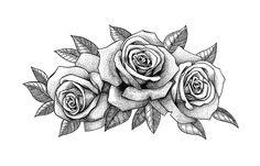 roses drawn koni polycode co