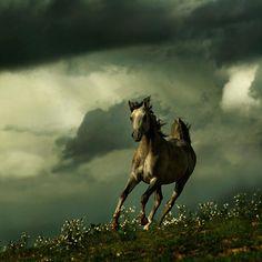 Wojtek Kwiatkowski (Wojtek Kwiatkowski) - one of the most famous photographers of horses. He is the author and publisher of books on breeding Arabian horses in the world. All The Pretty Horses, Beautiful Horses, Animals Beautiful, Beautiful Creatures, Beautiful Life, Equine Photography, Wildlife Photography, Animal Photography, Amazing Photography
