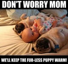 Snorable - Your daily dose of cute dogs and puppies. : Two Pugs and a baby Baby Animals, Funny Animals, Cute Animals, Fu Dog, Dog Cat, Cute Pugs, Cute Puppies, Bulldog Puppies, Funny Animal Pictures