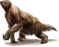 giant sloth - Google Search