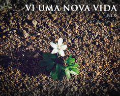 """""""Vi uma nova vida"""" - Noé http://www.noe-ofilme.pt"""