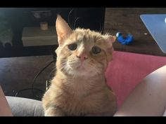 Couple Takes a Chance on Sad Shelter Cat Who Couldn't Find Home, an Hour...