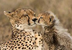 beautiful-wildlife:  Love n CarebyKanwar Deep Juneja