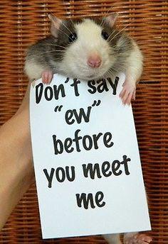 <3 As Seen on Facebook. #rats #rat