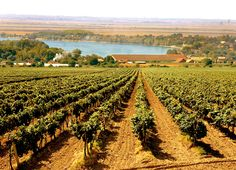 Austrian wine region